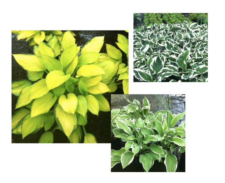 What do Hostas and Subway Tile have in Common?