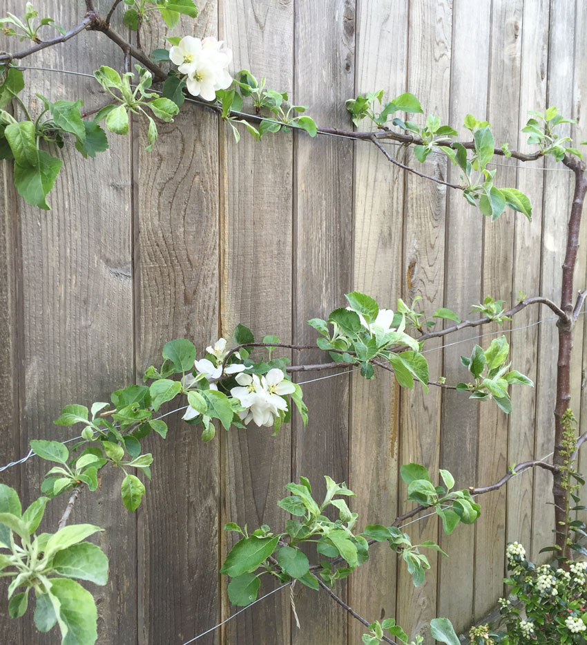 Do's And Don'ts For Choosing The Right Fence Colour